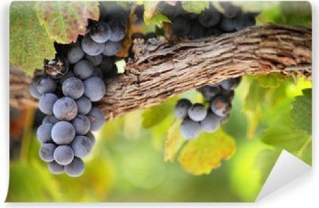Blog goede oude wijn in mooie nieuwe zakken 315x205